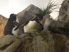 Attack of the Killer Penguin